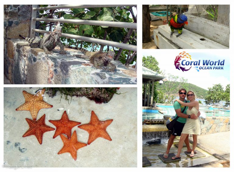 Coral World Ocean Park // St. Thomas
